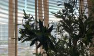 Остекление и утепление балконов в Москве - 217047741
